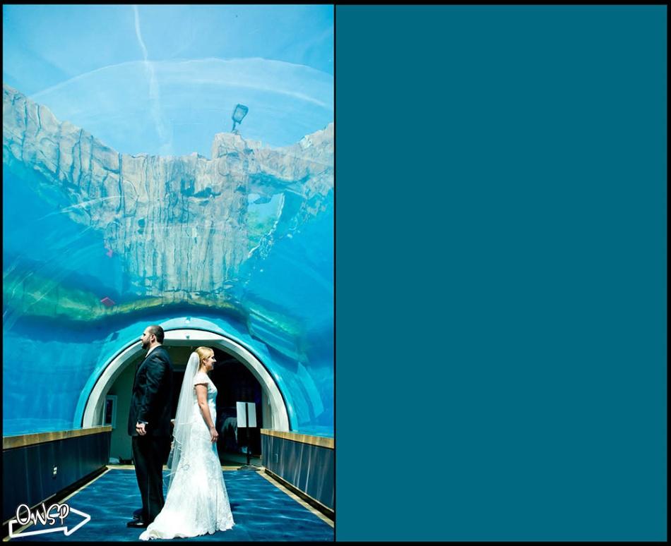 OWSP Wedding - 1